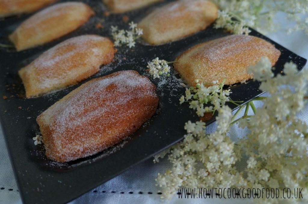 elderflower madeleines